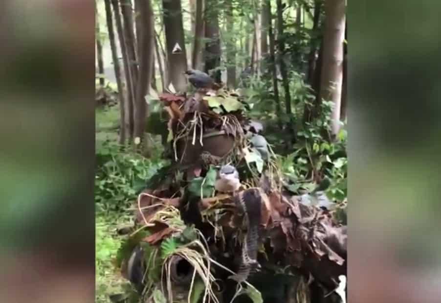 ギリースーツで草木に化けたサバゲーマーに小鳥が舞い降りる